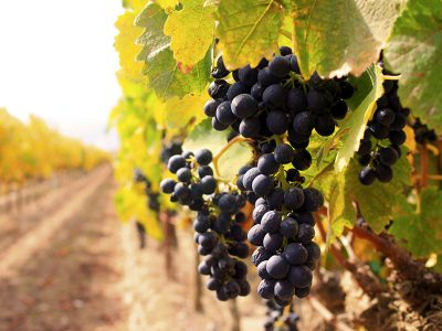 Vinobranie 2018 | Promitor Vinorum